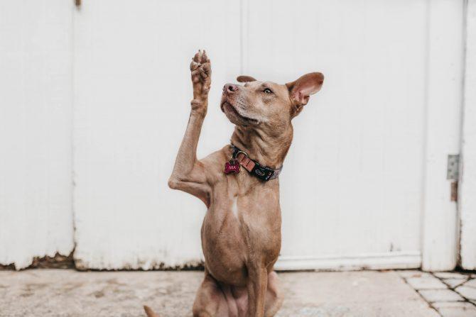 dog raising hand