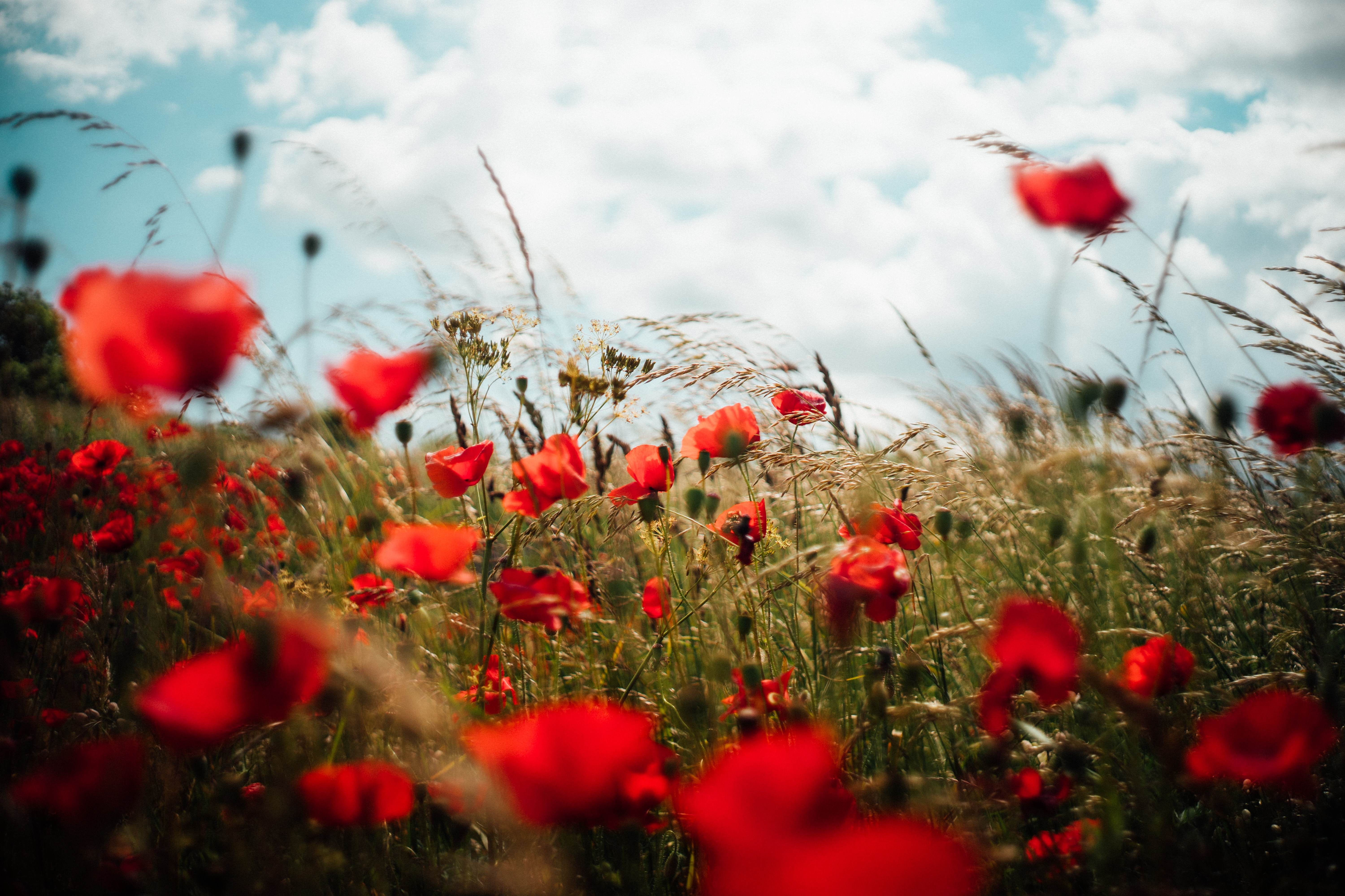 Lest We Forget: 5 Invaluable Ways to Remember Canada's Veterans